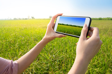 Woman tourist use smartphone to take photos of rice field beautiful landscape.