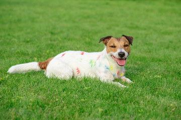 Silly messy dog stained with colorful paint on green grass