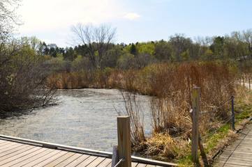 Boardwalk in the wetland during spring