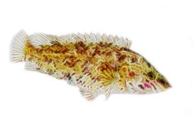 Fractal fish
