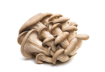 mushrooms oyster mushroom