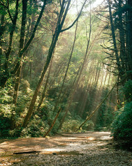 Fern canyon sunrays