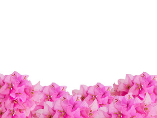 framework of pink bouquet Bouginvillea flowers with empty space on white background and Clipping Paths for easy die cut