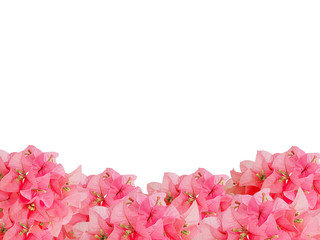 framework of red bouquet Bouginvillea flowers with empty space on white background and Clipping Paths for easy die cut