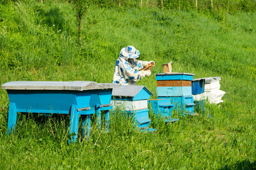 Bee keeper with blue beehives