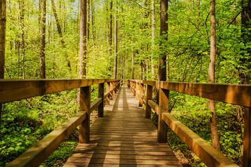 Drewno Most w lesie
