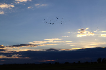 A flock of birds flying high above dark clous masking the horizon as the sunset fades
