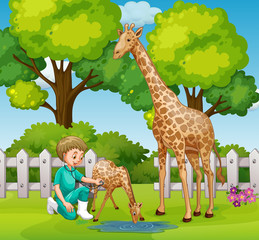 A Vet Checkup Giraffe at Zoo