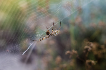 A large spider on a thin web and its victim