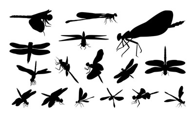 Set of Various Dragonfly silhouette vector, Animal Sign and Symbol