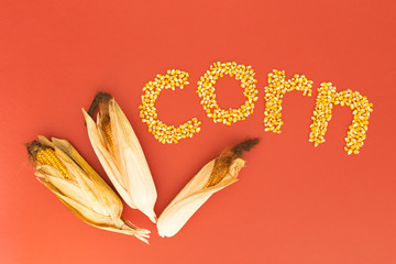 Concept of the word corn in english language formed with dry corn seeds on red background and decorated with golden corn cobs