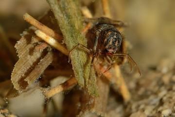 Caddisflie larvae