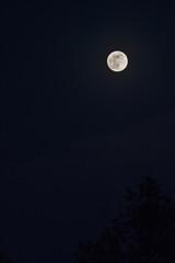 A full moon in the black sky.
