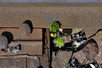 Rusty bolts on metal surface of railroad rails, crushed stones with growing silver acer sprout with first leaves, top view