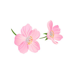 Blooming gentle pink spring flowers of cherry or apricot. Decorative vector element for postcard or product packaging