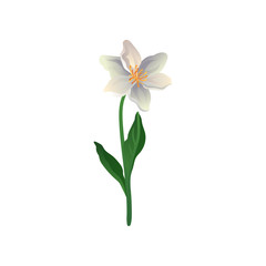 Colorful vector icon of cute spring flower. Lily with petals in gradient colors. Element for botanical book, postcard or textile