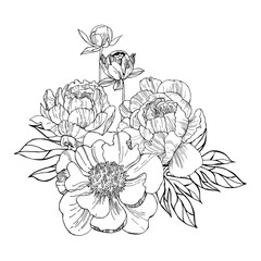 Hand drawn peonies. Vector sketch illustration