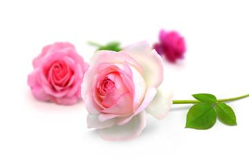 Blumen 915