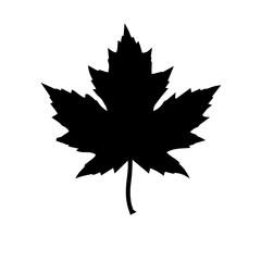 icon of a maple leaf. raster illustration
