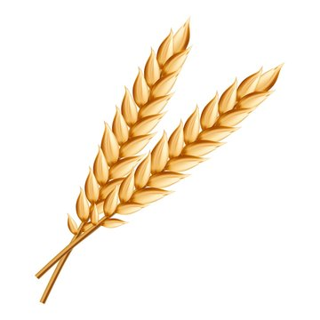 Wheat icon. Realistic illustration of wheat vector icon for web design isolated on white background