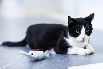 Black-and-white cat relaxing at home.