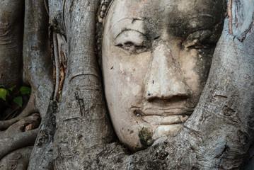 Ruinenstadt Ayutthaya, Wat Mahathat: Buddha Kopf in Baum eingewachsen, Ikone