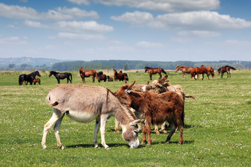 donkeys and horses in pasture