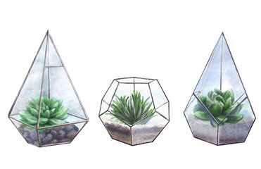 Succulents in geometric florariums