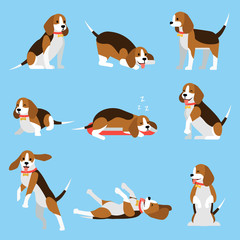 Cool illustration with friendly funny beagle puppy in various poses. My lovely pet concept. Vector set in flat style