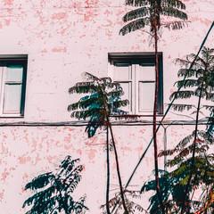 Tropcal urban life. Palm location. Minimal fashion mood