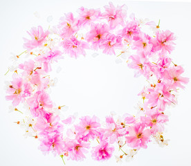 Circle frame floral background: vivid pink apple blossom