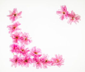 Floral background: vivid pink apple blossom on a corner. Copy space.