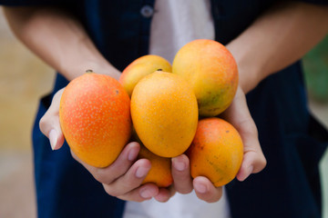 Fresh mango fruit on farmer's cupped hand