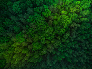 Colorful trees in spring forest,top down aerial
