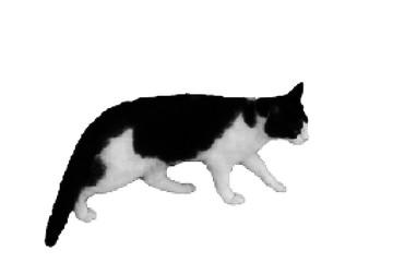 Walking cat. Isolated on white background. Vector illustration.