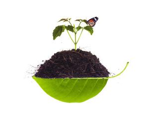 Sapling on pile on leaf and nature 1