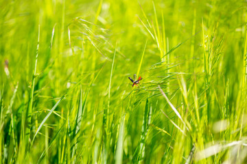 meadow grass close-up. Green field grass in the sun. Green herbal background. Grass background
