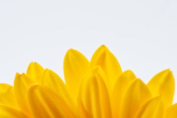 Yellow daisy border on white background with room for copy text