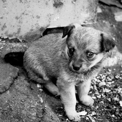 Funny puppy sitting on ground. Portrait of little mongrel.