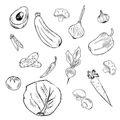Doodles, hand drawn simple sketches of vegetables. Vector illustration isolated on white background.
