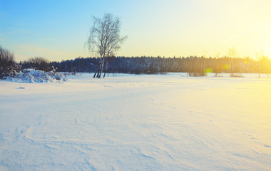 Frosty winter landscape with birches illuminated by rising sun.