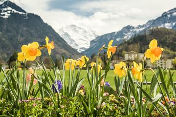 Wall Mural - Beautiful colorful flowers in Hohematte park in Interlaken, Switzerland