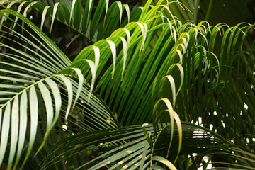 Tropical rain-forest. Tropical plants. Close-up, selective focus, no people