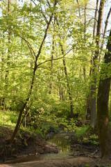 nature landscape flora forest trees trail Creek swamp bushes greenery walking oxygen air sky grass stump Creek water oxygen season autumn summer birch river glade mountain
