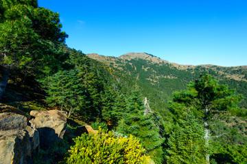 Paraje Natural Reales de Sierra Bermeja, Genalguacil, Andalusia, Spain