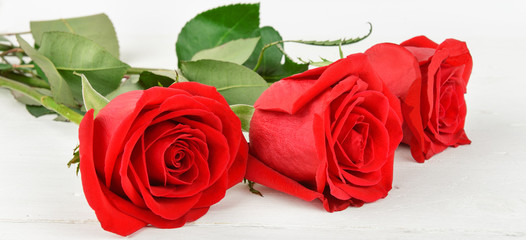 Beautiful red roses on a white wooden background.Wide photo.