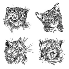 Set of cute portraits of cats. Sketch. Engraving style. Vector illustration