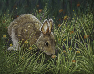 Rabbit Sniffing the Clover