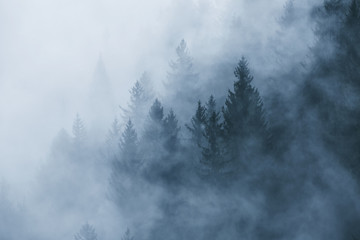 Papiers peints Forets Fantasy foggy forest landscape in the morning fog. Picture was taken in Slovenia, EU.