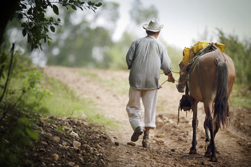 Rear view of a senior man with a horse.